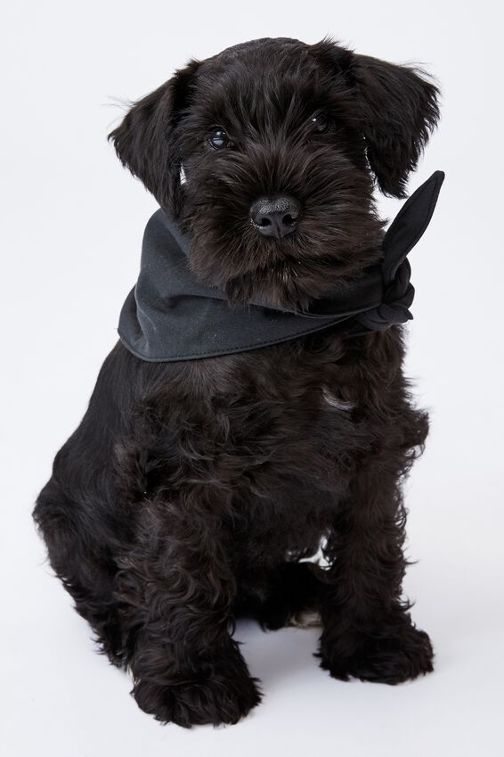 Body Buddy Pet Bandana, WASHED BLACK