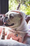 Dog Costume Medium, BLUE UNICORN
