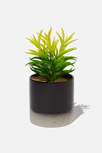 Shaped Planter With Plant, BLACK & WHITE DUO
