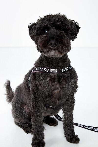Pet Strap Harness, BAD ASS - M