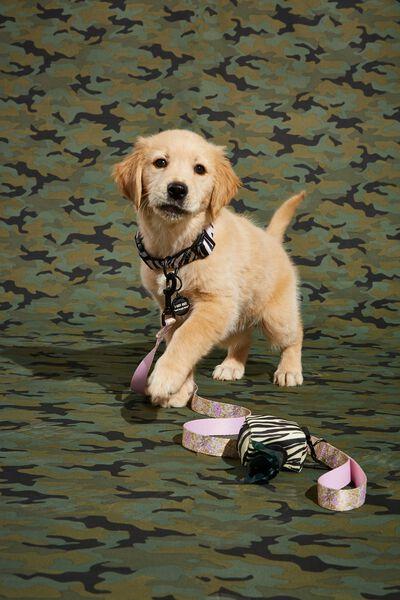 Pet Club Pet Lead, SUZI FLORAL
